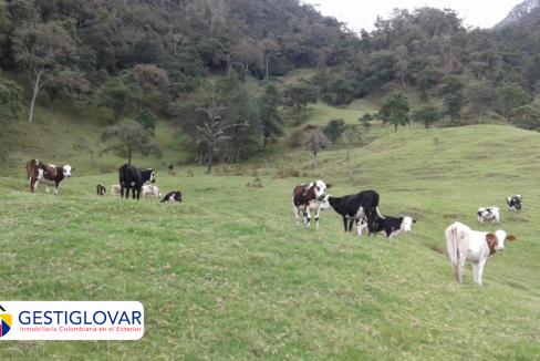 finca-ganadera-animales-sevilla-valle-gestiglovar