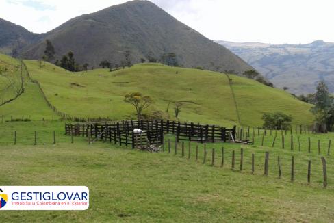 finca-ganadera-corrales-sevilla-valle-gestiglovar